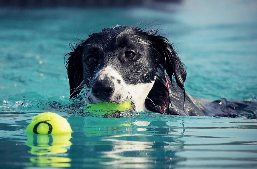 Pet Therapy with a Water Treadmill